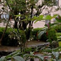 雨の日が続いてます - !!