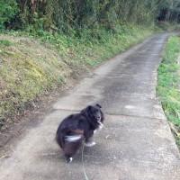 秘密の散歩道