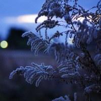 夕暮れプチ散歩