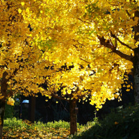 秋色*私の街~蓮華寺池公園