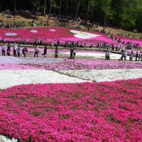 秩父・羊山公園の芝桜です~~♪