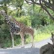 動物園パート2
