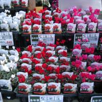 園芸店の花コーナー