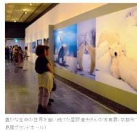 ■ 星野道夫(写真家)没後20年/横浜・高島屋