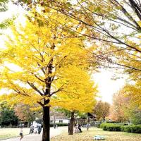 武蔵国分寺公園の秋
