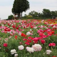 三重県伊賀市 メナード青山リゾート