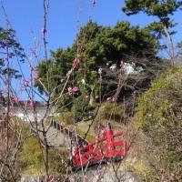 小田原城と曽我梅林
