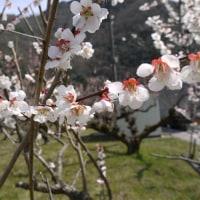 3/25 今日のパピ子といちご (安佐北区)