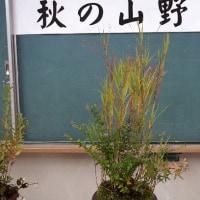 『秋の山野草展』
