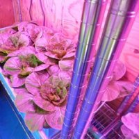 室内水耕栽培57 (H29.2.21~)