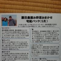 5月のお野菜おまかせ宅配パックお申込み受付中!