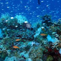 クリアな海のクリアな魚