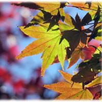 平野部の紅葉