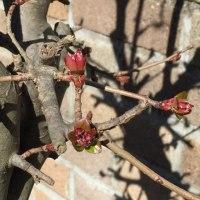 北風の中の小さい春♪