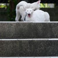 今日の一枚【today's shot】あくび (yawn)