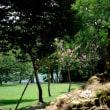 奈良公園の百日紅