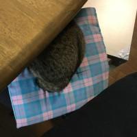 テーブルの下で〜〜