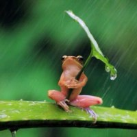 昨日は穀雨( ^-^)ノ∠※。.:*:・'°☆