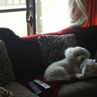猫の犬の友情
