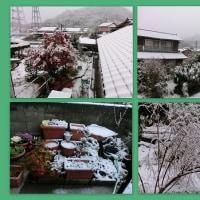 久しぶりの雪&私のリユック