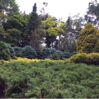 北海道ガーデン街道 2日目  十勝千年の森 真鍋庭園