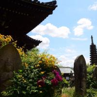 ヤマブキの花の寺