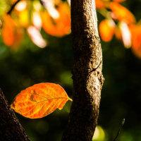 紅葉の中を散歩