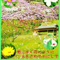 野の花 コンサート in 卯辰山〔みどりの日〕