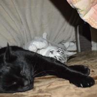 こたつ猫2匹