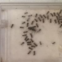 アリの家族の在り方