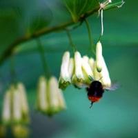 自然教育園日記 その88  秘密の花園―2 大口径レンズでの接近撮影