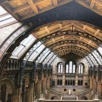 「バベルの塔」展&「大英自然史博物館展」