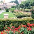 [札幌]大通公園バラ🌹園です。