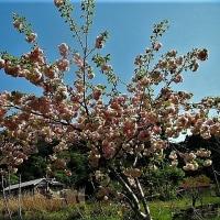 春の樹木は勢いがある