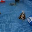 プールでも超マイペース