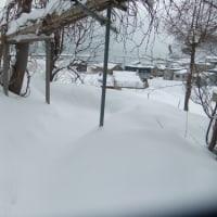 しんしんと降り続く雪