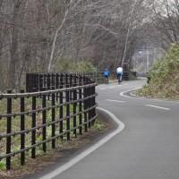 サイクリングロードにも春