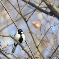[北海道編] 豊平区の野鳥