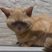 ネコは目をつむったまま