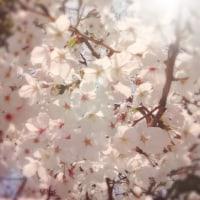花びらの煙_160419