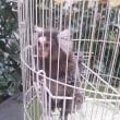 小さい~お猿o(^o^)o