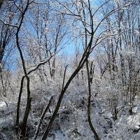 美しい雪の雑木林の写真をお送りいたします