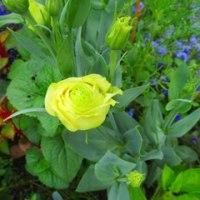 早くも秋冬野菜、来年春野菜の栽培計画!?