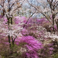 春爛漫 植物公園のお花見