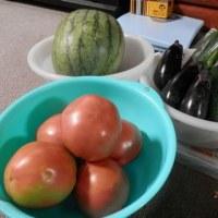 朝から収穫!