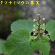 2017/07/20 金剛山 鬼の矢柄