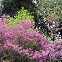 JR福知山線事故から12年/シャクナゲ寺に/絵画サークル雅会に参加/お陰様で1120日