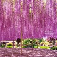 旅サイトに「各地の花の名所」の記事を載せました
