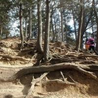 天覧山から日和田山(その4)
