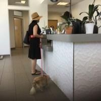 サンディエゴのペットホスピタルWe went to an animal hospital.
